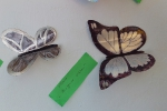 бабочки_3